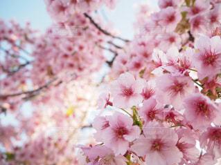 近くの花のアップの写真・画像素材[1102620]