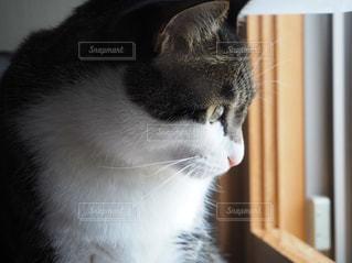 窓の前に座っている猫の写真・画像素材[1126841]