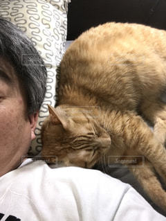 猫を持っている人の写真・画像素材[1306095]