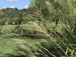 背景の木と大規模なグリーン フィールドの写真・画像素材[1457830]