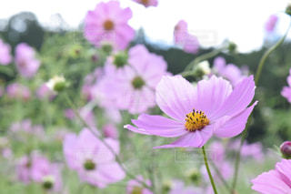 近くの花のアップの写真・画像素材[1516650]
