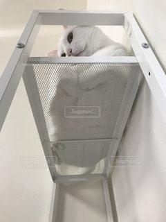 スーツケースの上に座っている猫の写真・画像素材[1521468]