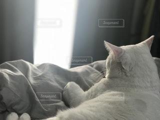猫の写真・画像素材[1575312]