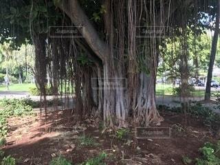 フォレスト内のツリーの写真・画像素材[1699874]