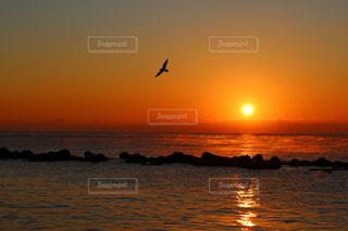 日の出と鳥の写真・画像素材[1107288]