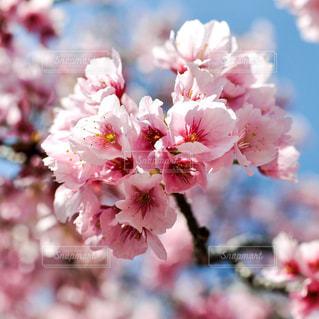 近くの花のアップの写真・画像素材[1098763]