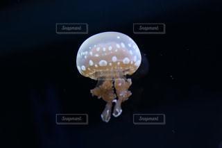 すみだ水族館のクラゲの写真・画像素材[1098984]