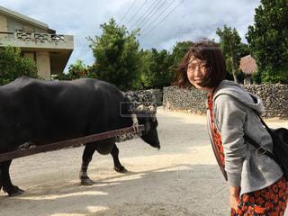 竹富島観光風景の写真・画像素材[1100481]