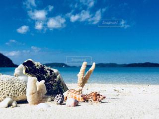 空海貝の写真・画像素材[1110940]