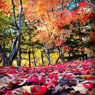 北海道の秋の写真・画像素材[1115688]