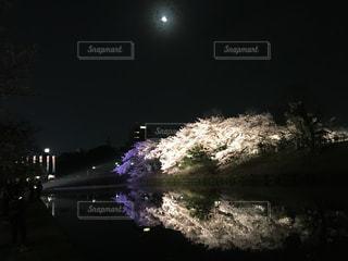 水面の桜の写真・画像素材[1102229]