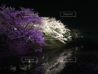 桜の写真・画像素材[1102244]