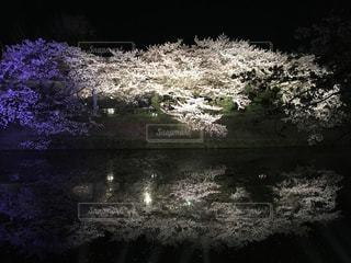 水面に映る桜🌸の写真・画像素材[1103102]