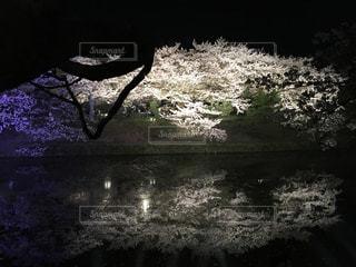 水面に映る桜🌸の写真・画像素材[1103103]