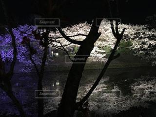 水面に映る桜🌸の写真・画像素材[1103104]