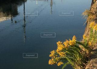 水の体の写真・画像素材[1099262]