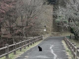 木フェンス側でパスの写真・画像素材[1099311]