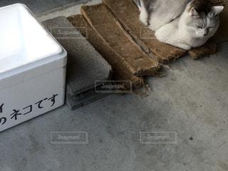 眠り猫の写真・画像素材[1099315]