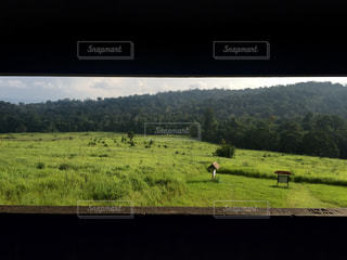 緑豊かな緑の草原で放牧動物の群れの写真・画像素材[1115512]