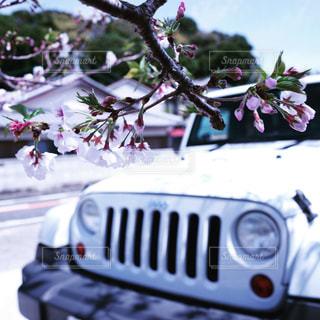 近くの花のアップの写真・画像素材[1099605]