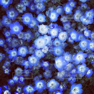 近くに珊瑚のアップの写真・画像素材[1099644]