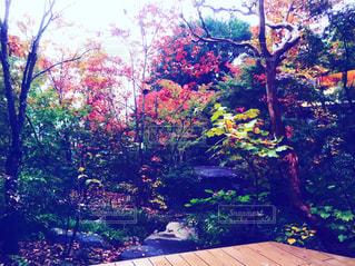 秋の写真・画像素材[1099650]