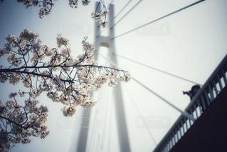 ここから眺める桜が好きだの写真・画像素材[1100097]