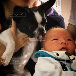 赤ん坊と犬の写真・画像素材[1100137]