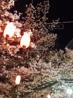 夜桜の写真・画像素材[1100261]
