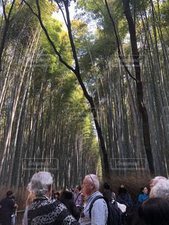 木の隣に立っている人のグループの写真・画像素材[1100467]