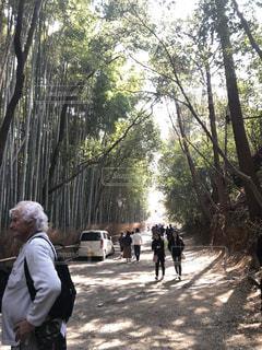 森の人々 のグループの写真・画像素材[1100468]