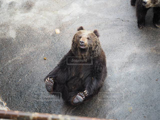熊の写真・画像素材[1101891]