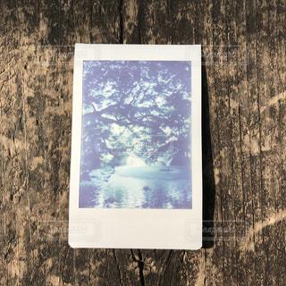 チェキで撮影した井の頭公園の池 - No.1195031