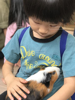モルモットを抱っこしている小さな男の子の写真・画像素材[1199536]