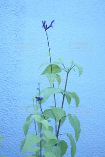 壁際に咲く花の写真・画像素材[1201463]