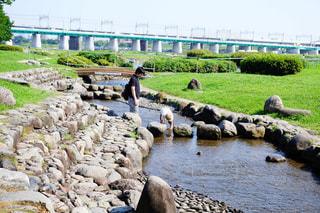 多摩川で川遊びの写真・画像素材[1212986]