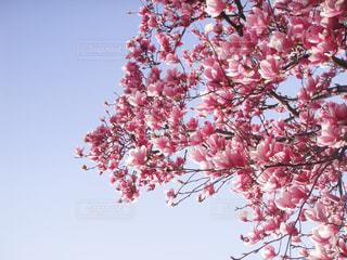 春の写真・画像素材[1212990]