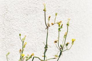 壁と花の写真・画像素材[1213854]