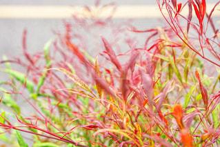 カラフルな植物の写真・画像素材[1214520]