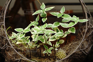 お洒落な植木の写真・画像素材[1214716]