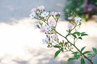 可憐に咲く花の写真・画像素材[1223709]