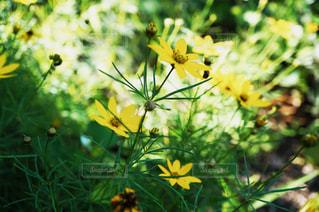 黄色と緑の写真・画像素材[1223993]