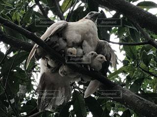 枝の上に座って鳥の写真・画像素材[1104349]