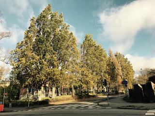 道路の真ん中にツリーの写真・画像素材[1104352]