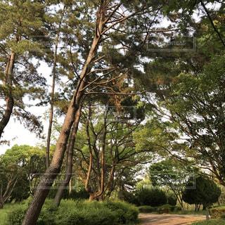 公園の木 - No.1102384
