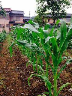 庭園の緑の植物の写真・画像素材[1101848]