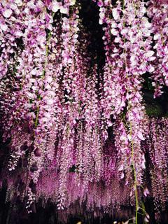 大きな紫色の花は森の中の写真・画像素材[1101849]