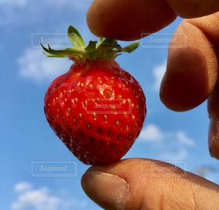 近くに果物を持っている手のアップの写真・画像素材[1154634]