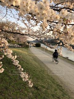 未舗装の道路を自転車に乗る人の写真・画像素材[1102018]