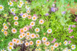 近くの花の写真・画像素材[1288901]